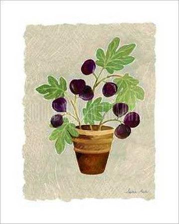 Sophie-adde-fig-tree(2)