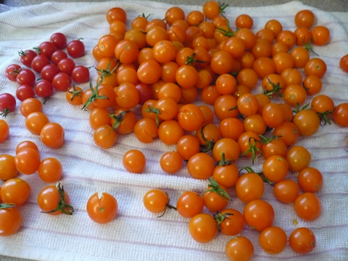Jean Pace Tomatoes